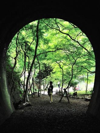 定光寺の新緑_c0330563_16251868.jpg