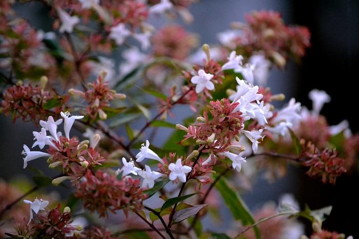 庭も秋_c0119197_10101379.jpg