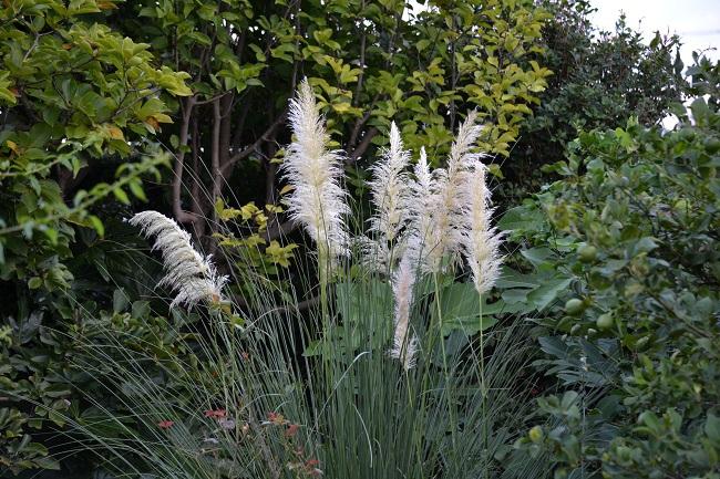 庭も秋_c0119197_10102614.jpg
