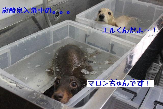 b0130018_9441069.jpg