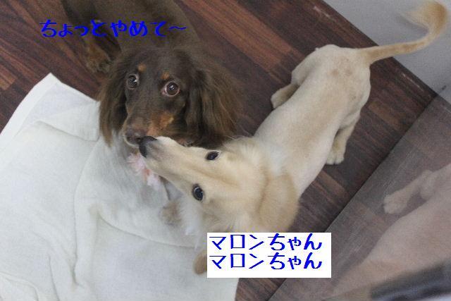 b0130018_9451368.jpg