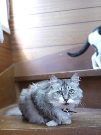 猫のお友だち ハナちゃんエムくんシロちゃんハルちゃんダイヤちゃん編。_a0143140_0102324.jpg