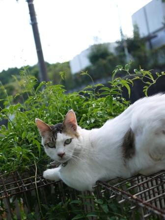 猫のお友だち ホビちゃんモコちゃんガブくんスペードちゃん編。_a0143140_0212999.jpg