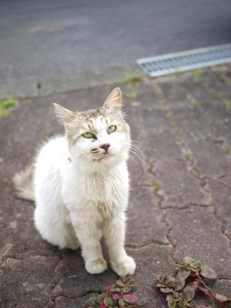 猫のお友だち ホビちゃんモコちゃんガブくんスペードちゃん編。_a0143140_0214911.jpg