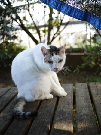 猫のお友だち ホビちゃんモコちゃんガブくんスペードちゃん編。_a0143140_0232925.jpg