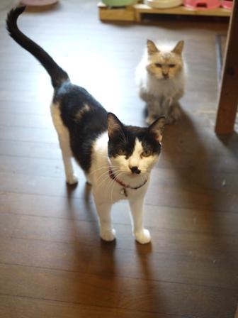 猫のお友だち ハナちゃんエムくんシロちゃんハルちゃんダイヤちゃん編。_a0143140_071227.jpg