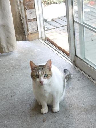 猫のお友だち ハナちゃんエムくんシロちゃんハルちゃんダイヤちゃん編。_a0143140_08135.jpg