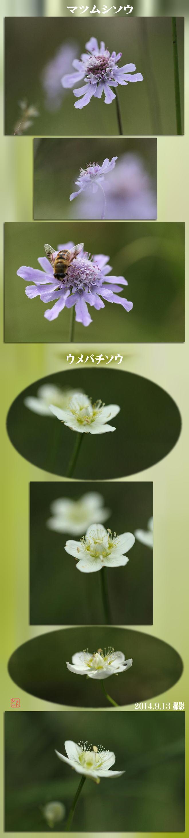 f0164592_7303099.jpg