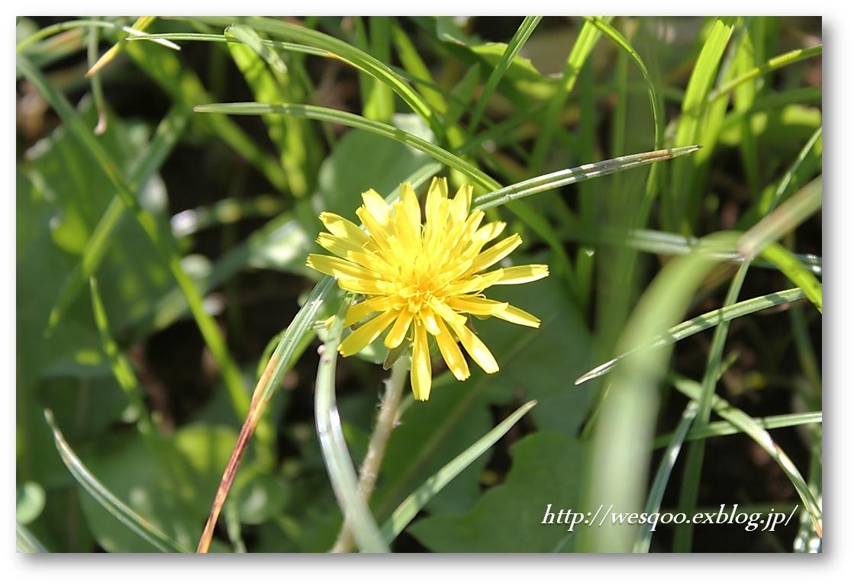 畑で草むしり_a0161111_22271593.jpg