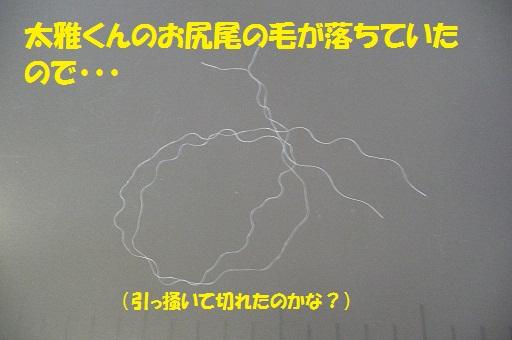f0121712_7575291.jpg