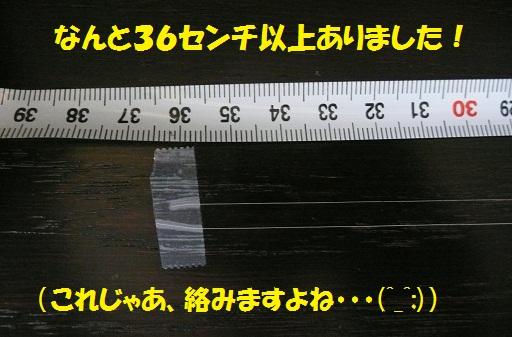 f0121712_758588.jpg