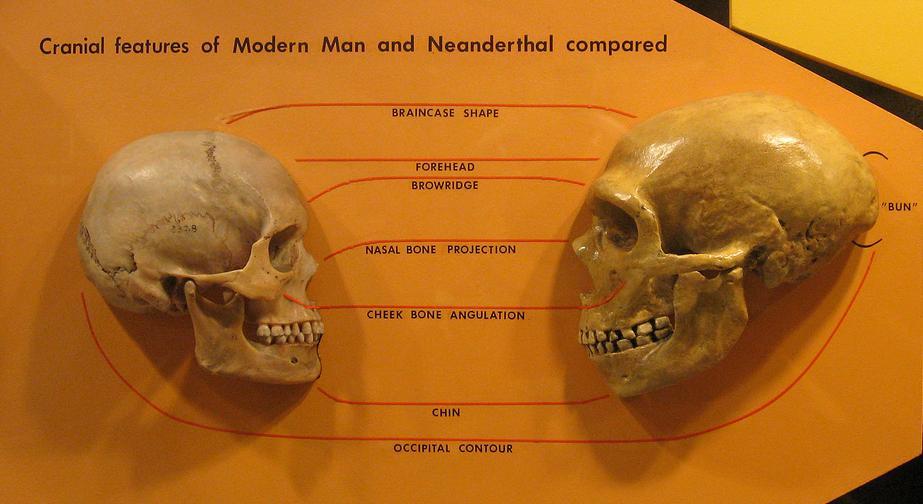 人魚の新たなる証拠「Mermaid New Evidence」3:ネアンデルタール人が海底原人化した説!?_e0171614_98494.jpg