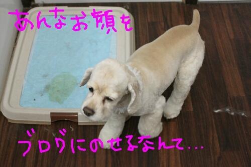 b0130018_22142080.jpg