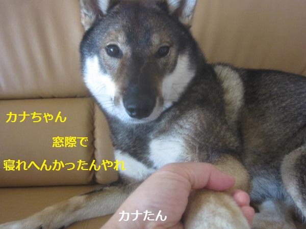 f0143123_9592694.jpg
