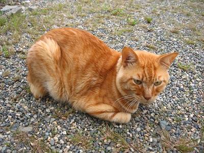近況と猫など、いろいろ(^^)_f0182936_21313786.jpg
