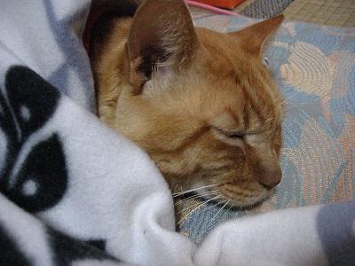 近況と猫など、いろいろ(^^)_f0182936_21322375.jpg