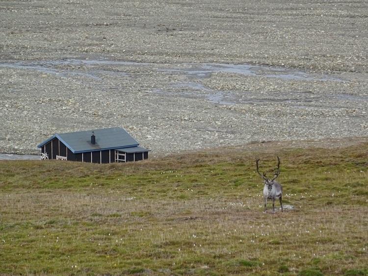 Svalbard(スヴァールバル諸島)ハイキング_e0182138_1915938.jpg