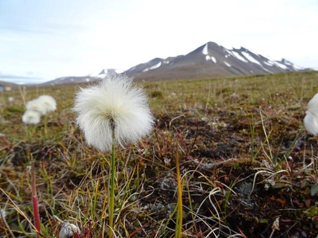Svalbard(スヴァールバル諸島)ハイキング_e0182138_1917122.jpg