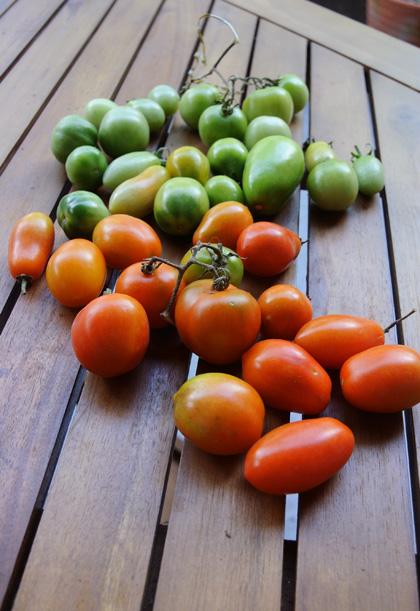 緑のトマトの味噌漬け と お醤油えらび_d0180447_22513968.jpg