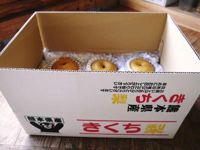 熊本梨 ジャンボ梨『新高』 樹上完熟で本日初出荷しました!!_a0254656_18231257.jpg