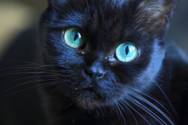 子猫の貰い手探してます_f0075075_17182956.jpg