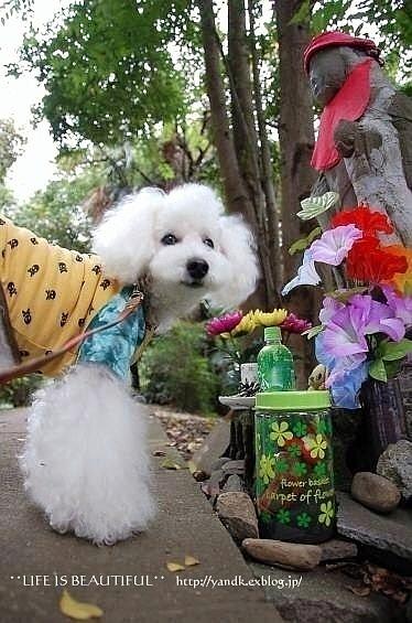 初秋の花たち**_d0083623_22461041.jpg