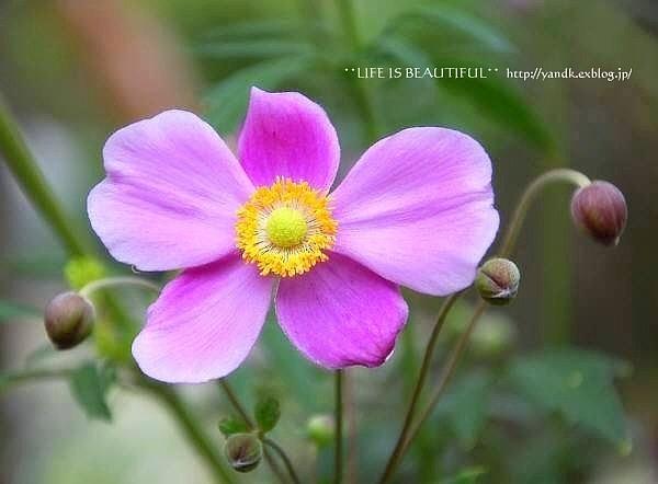 初秋の花たち**_d0083623_22541168.jpg