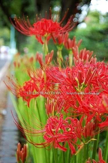 初秋の花たち**_d0083623_2254257.jpg