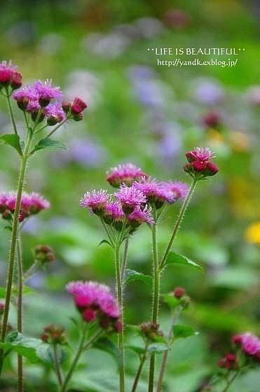 初秋の花たち**_d0083623_2323163.jpg