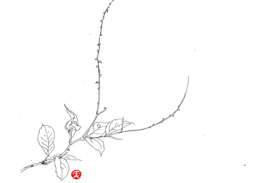 植物画  水引_d0101846_7244968.jpg