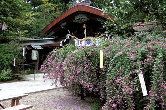 梨木神社 萩まつり_e0048413_18302411.jpg