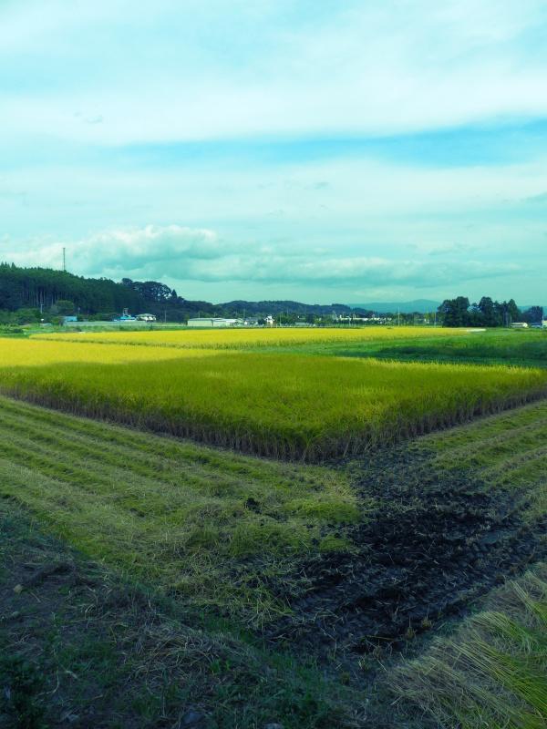 稲刈り_a0288621_07103307.jpg