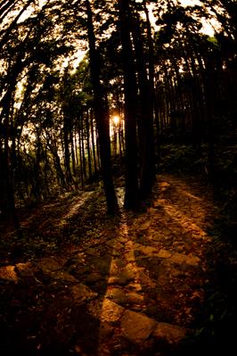 熊野古道での「心身修養」の旅である・・・_b0169522_21432660.jpg