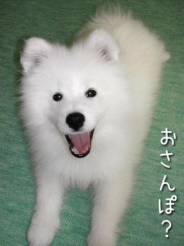 ダメぽ・・・_c0062832_740922.jpg