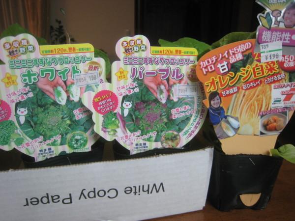 まだまだ続くよ秋冬野菜!_e0121558_23174583.jpg