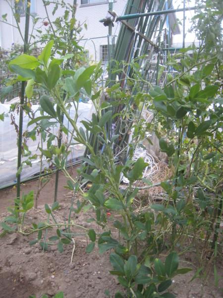 まだまだ続くよ秋冬野菜!_e0121558_23190998.jpg