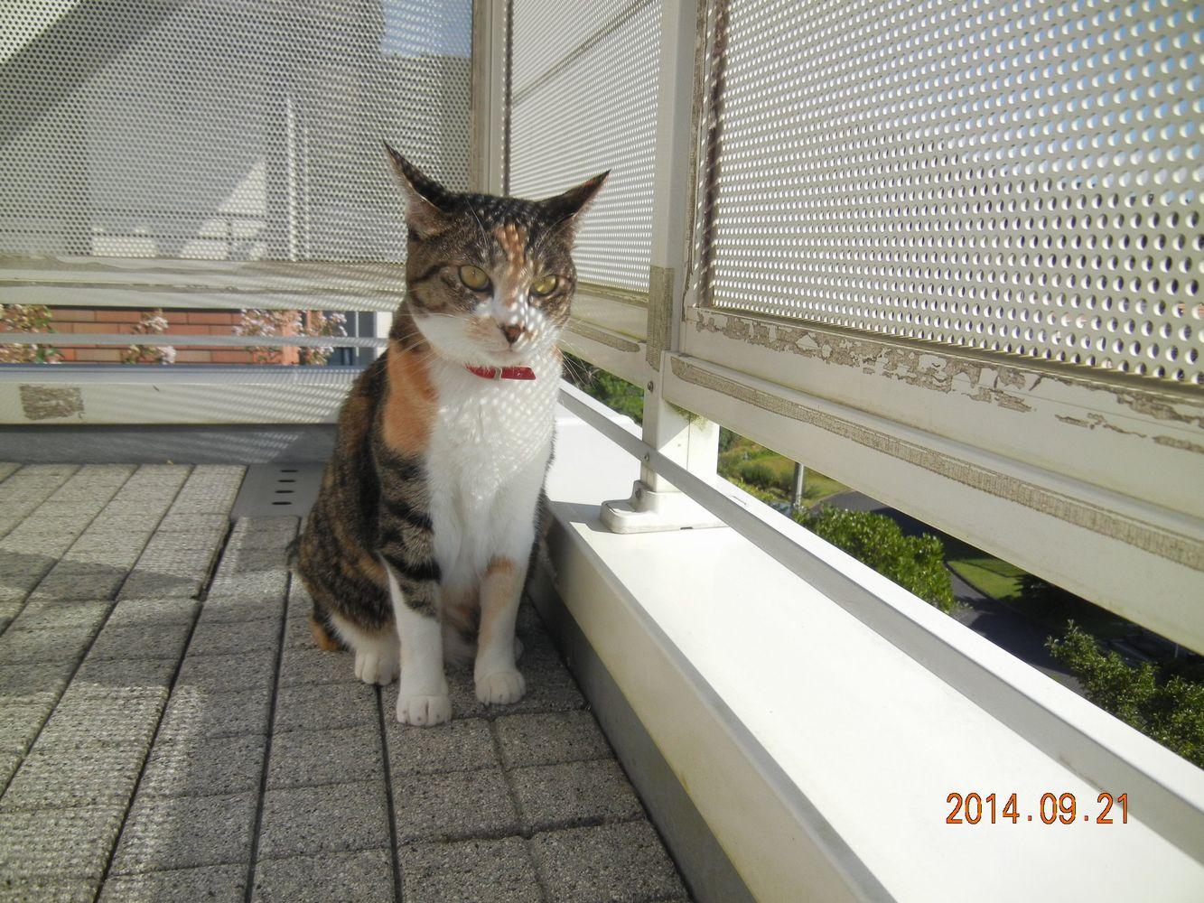 '14,9,21(日)健気なこころちゃん!_f0060461_1031319.jpg
