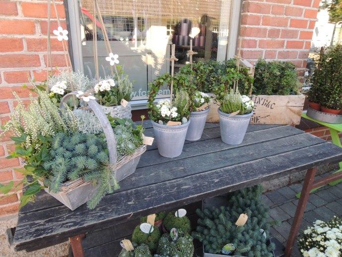 デンマークの小さな町の花屋さん・・・Forglemmigej_b0137969_17325268.jpg