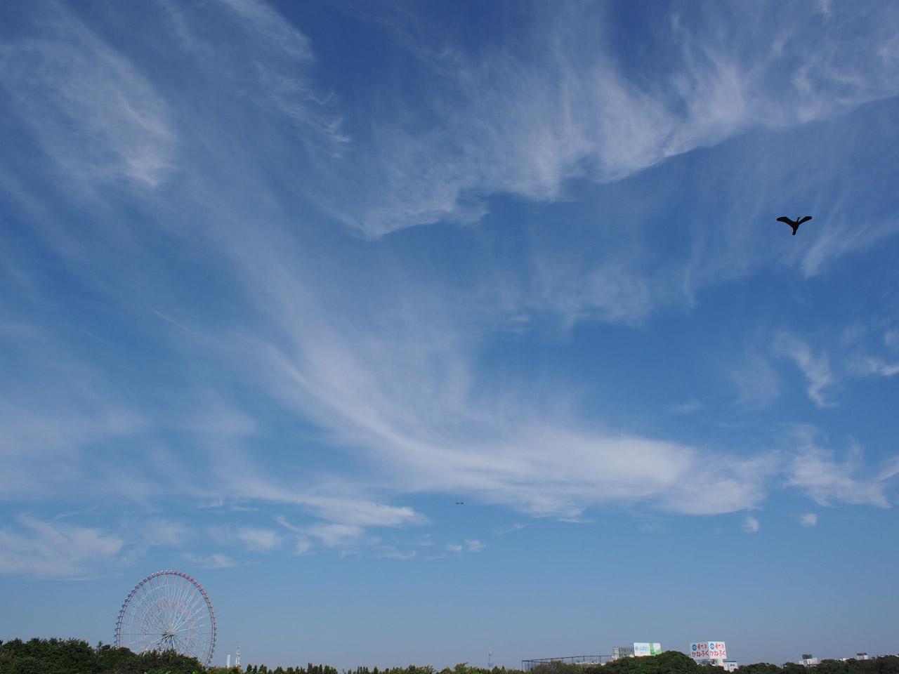 青い空と赤い花_b0021375_137930.jpg