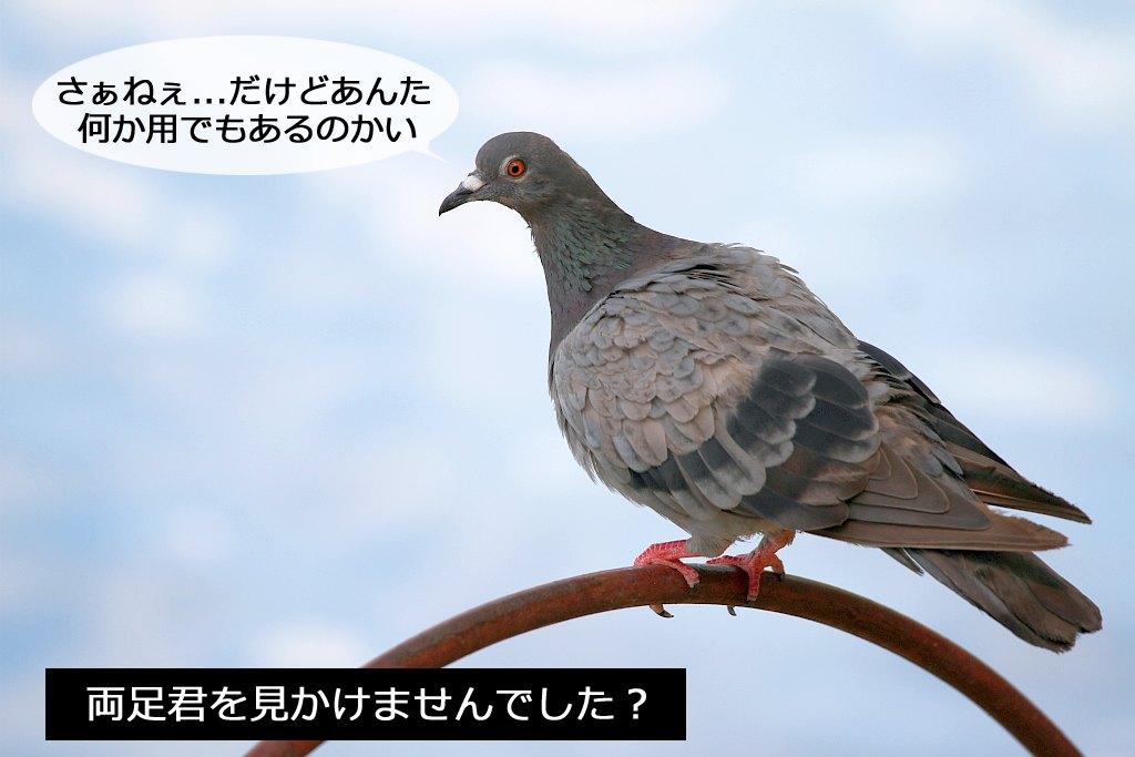 b0174191_16325902.jpg