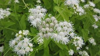 お花のズームアップ4_b0219993_17351244.jpg