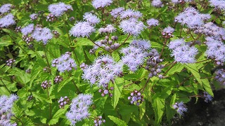 お花のズームアップ4_b0219993_1735425.jpg
