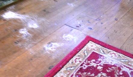 灰だらけの足跡の謎_f0155522_718123.jpg