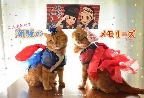 ピックアップブロガー更新/キュートなスイーツ&ハンドメイド作品、猫写真が人気!_f0357923_13392164.jpg
