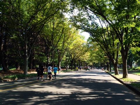 9月21日 駒沢公園はただいま開園中_a0317236_8194543.jpg