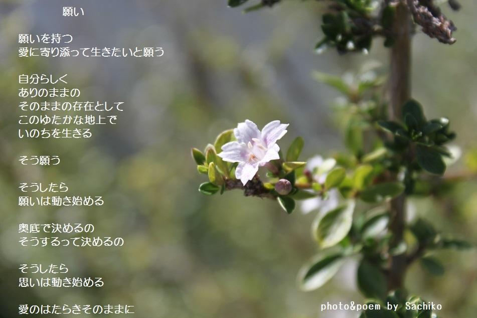 f0351844_08244412.jpg