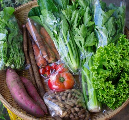 今週の野菜セット(9/23~9/27着)_c0110869_12465145.jpg