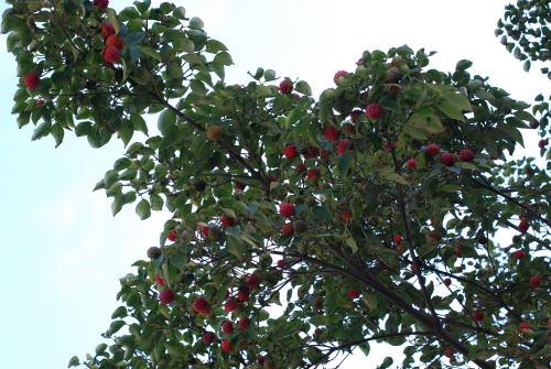 夏から秋に移り変わる風景_d0091671_10331395.jpg