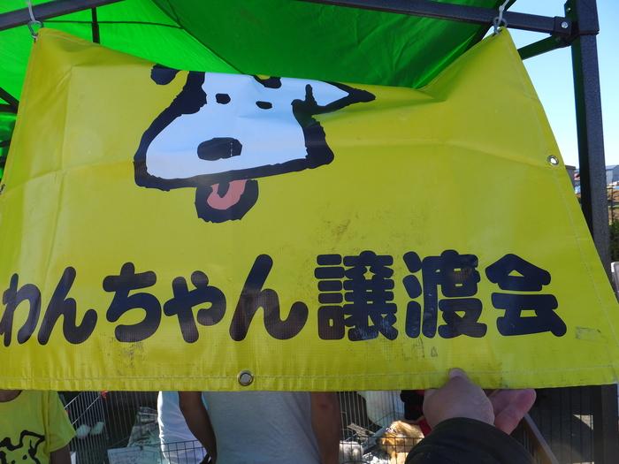 わんちゃん譲渡会_c0226202_15375159.jpg