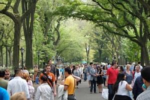 初秋のセントラルパークの巨大な並木道 The Mall_b0007805_2131614.jpg
